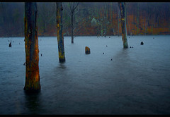 We are Lost (SunnyDazzled) Tags: park trees mist rain fog forest dead lost newjersey underwater state foggy haunting lone