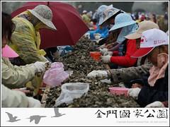 2011-石蚵小麥節-05.jpg