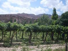 Catamarca: Bodega municipal lanza sus vinos «Hualfin»