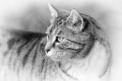 In the Moment (dibytes) Tags: yard cat clyde spring collingwood monochromatic april 365 3652011