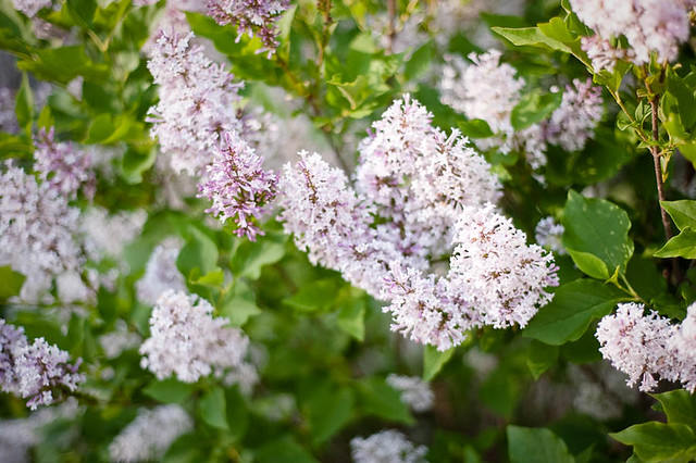FlowerGarden2011-9