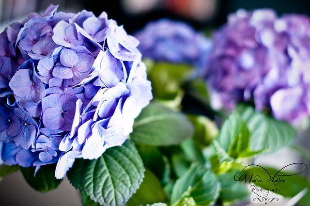 Flowers 010 blog