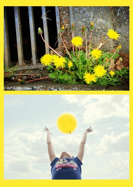 yellowdip