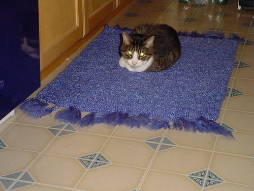 Sylvester on kitchen rug