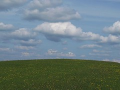 Learning Curve (mags_Tag) Tags: field clouds austria feld wolken wildflowers earthday oesterreich 2011 wiesenblumen irenental