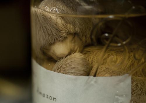 Fetal Sloth