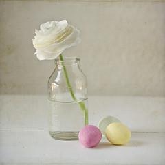 easter still life ({Miss Honey}) Tags: stilllife white flower texture easter sweet pastel cream ranunculus eggs lesbrumes assignment52162011