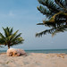 Lazy Dog: Seine Bight Belize