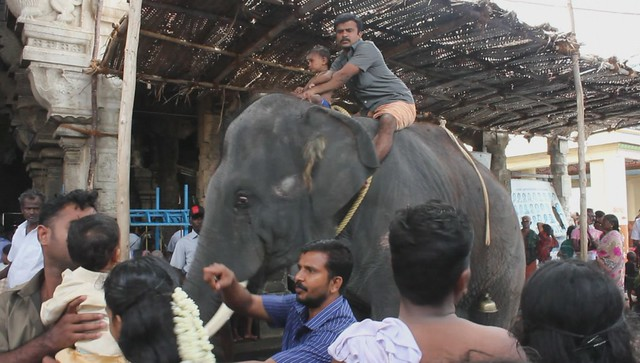 VIDEO: Elephant Rejoicing, Tiruchendur