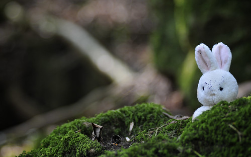 Easter Bunny at Puzzlewood