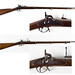 Springfield & Enfield Rifle