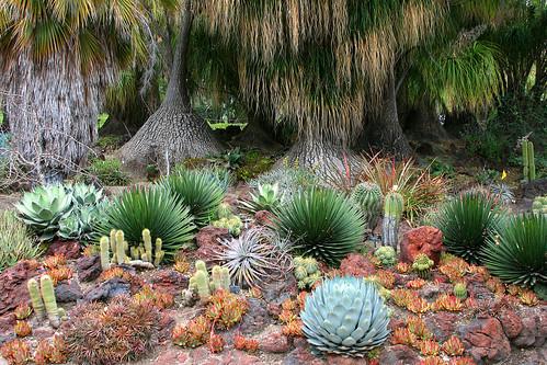 huntington succulent textures