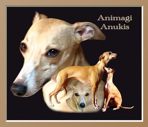 Animagi Whippets Collagen - Animagi Anukis