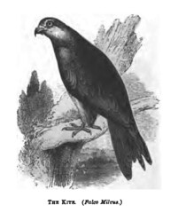 The Natural History of Selborne-1861  - 30