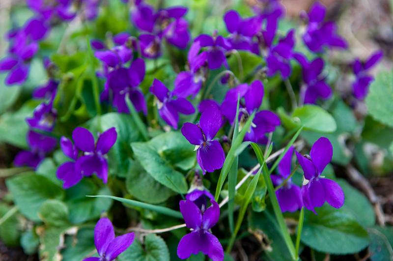 20110502-spring-0001