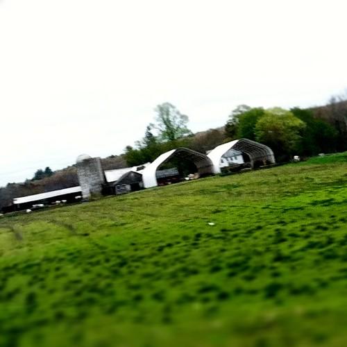 [123/365] Farm