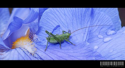 Grasshopper by supermillo