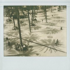 palm spring (cHr1st1an S images) Tags: street city light shadow people bw italy dog sun sunlight white motion black film analog palms polaroid lights blackwhite spring movement flickr shadows image palm explore genova analogue bianco nero biancoenero impossible analogic analogico instantfilm polaroidimage chr1st1ans impossiblefilm impossibleprojectfilm pz600 pz600silvershade christiansorrentino impossibleprojectpz600silvershadefilm impossibleprojectpz600silvershade impossiblepz600silvershadefilm pz600silvershadefilm