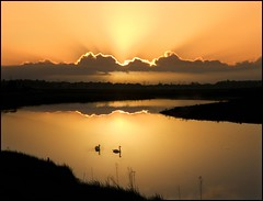 Dawn Stillness (adrians_art) Tags: plants water birds silhouette clouds swimming sunrise reeds dawn early flight floating swans rivers rays h20