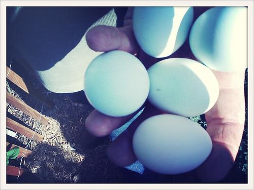 John's eggs :)