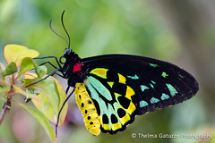Butterfly (Thelma Gatuzzo) Tags: animals gardens canon butterfly florida bokeh papillon borboleta april animais farfalla butterflyworld 2011 60d bestcapturesaoi mygearandme mygearandmepremium mygearandmebronze mygearandmesilver mygearandmegold thelmagatuzzo