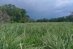 Saiwa Swamp National Park, Kenya