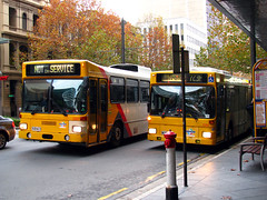 King William Street Buses, Adelaide (baytram366) Tags: street man bus public buses transport stop signage adelaide service artic in rigid southlink not adelaidemetro