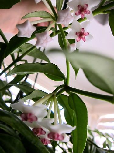 Bella blooms