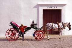"""Caballero"" (Lorenzocom) Tags: plaza de ronda toros andalusia cavallo spagna hourse calesse"