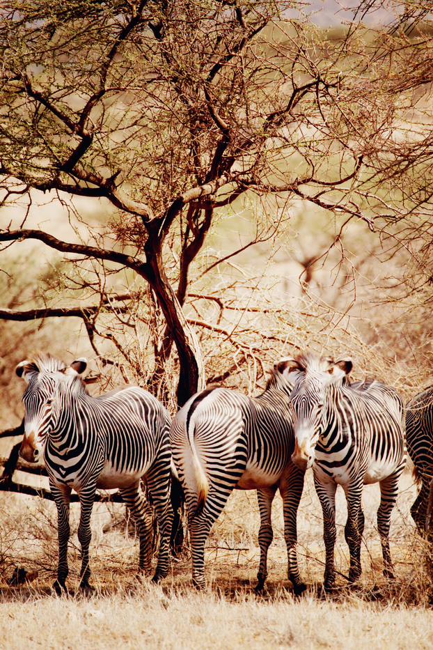 Safari 09