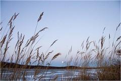 Хатырская луна 2007 (9) (Магадан) Tags: anadyr chukotka анадырь чукотка чукчи луораветланы luoravetlan
