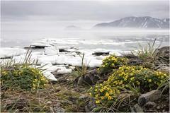 Цветистая Чукотка 23 (Магадан) Tags: anadyr chukotka анадырь чукотка чукчи луораветланы luoravetlan
