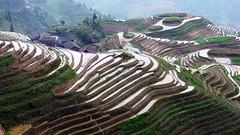 China  -  Longji Terraces...中国 - 龙脊梯田 (AlainBadoual) Tags: china highresolution asia guilin sony terraces cybershot highdefinition asie hd dsc chine guangxi longsheng longji pingan ping'an hx9v