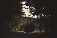 Lichtung (netzmensch23) Tags: photography fotografie vsco busch bume canon galgenberg wald wittichenau