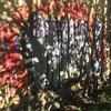 Hur in the shadows (svennevenn) Tags: hur graffiti skygger shadows gatekunst streetart bergen