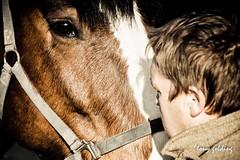 IMG_7788 (Tony Golding) Tags: horse canon shire breed heavy rare peterborough equine draft springshow drafthorse shirehorse 400d shirehorsespringshow shirehorsesociety tonygolding heavyhorsephotography shirehorsesocietyspringshowcollection forgetmenothere