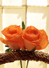 3\10 (DLo3t 2boha) Tags: flowers 2 canon ورد الحب صباح برتقالي كانون وردتين اثنين canong11 كانونجي11 انثنان وردتان
