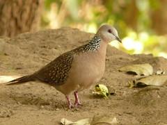 P1150587 (babsybou) Tags: travel india birds silent watching kerala du valley yatra sud inde attapadi birdswatching babsybou malleeshwaramjunglelodge pettickal