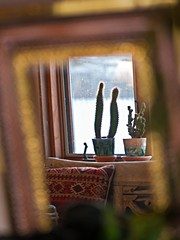 Multi-Cultural (jaxxon) Tags: cactus plants plant macro reflection window bench lens prime mirror nikon pad pillow micro fixed 28 365 mm nikkor f28 vr potted afs cactii 105mm 105mmf28 2011 d90 nikor project365 f28g gvr jaxxon jackcarson multifarious apicaday 105mmf28gvrmicro ayearinpictures nikond90 hpad nikkor105mmf28gvrmicro project365086 365086 086365 desklickr nikon105mmf28gvrmicro jacksoncarson jacksondcarson ayearinphotographs hpadw project3652011 2011yip 3652011 yip2011 2011ayearinpictures 2011365086 project365862011