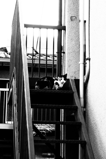 Today's Cat@2011-03-30