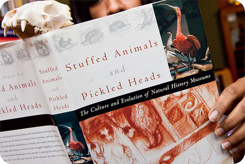2011.8. Stuffed Animals and Pickled Heads (Stephen T. Asma)