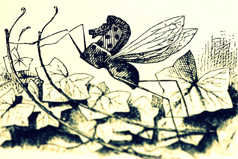 Rocking Horse-fly