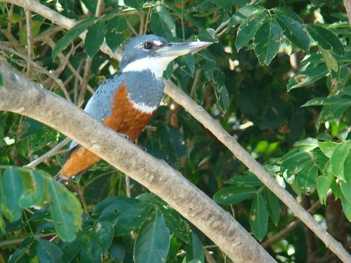Aves de Cpsta Rica