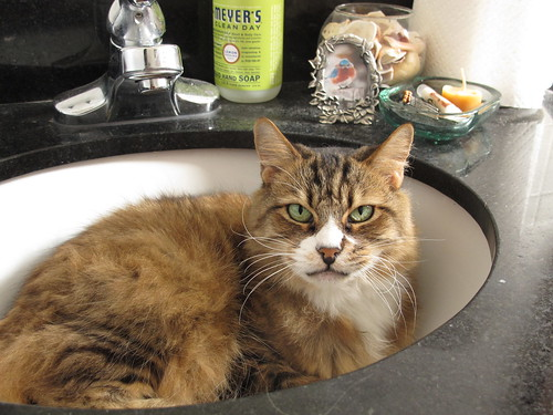 Our Sink Kitty