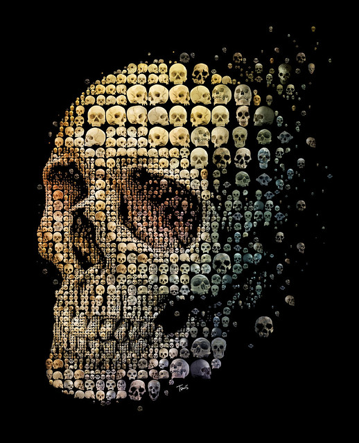 Skull evolution (for Discover magazine)