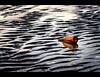 Beached Aguila, Crosby. Explored (Ianmoran1970) Tags: sunset beer bottle debris explore aguila explored ianmoran ianmoran1970