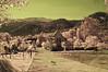Thai Countryside With Temple And Dog No.1 (aeschylus18917) Tags: dog mountains landscape ir thailand temple woods nikon scenery d70 nikond70 buddhist surreal buddhism hills thai infrared chiangmai nikkor 1870mm pxt f3545g 1870 doiinthanon เชียงใหม่ 赤外線 ราชอาณาจักรไทย maechaem 1870f3545g ดอยอินทนนท์ chomthong ダニエル ratchaanachakthai จอมทอง nikkor1870f3545g danielruyle aeschylus18917 danruyle druyle ルール ダニエルルール แม่แจ่ม nikkor1870f3545gdx