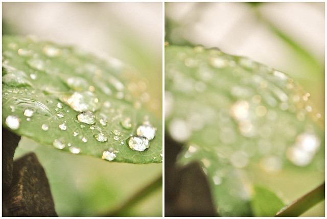 water droplets diptych