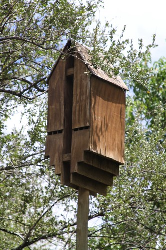 Bat house in rest camp