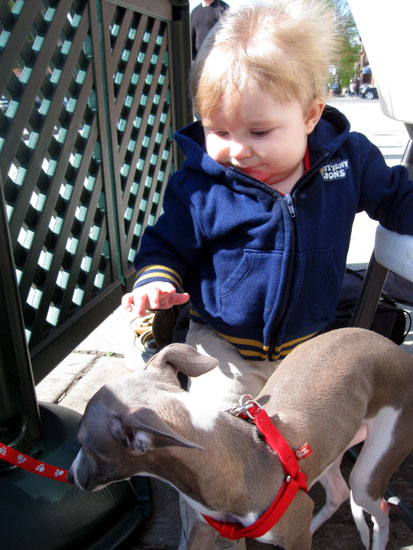 KFP with Baby Greyhound - 2